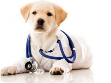 Il punteggio minimo di Ammissione al Test di Veterinaria 2015