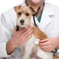 Test Veterinaria 2019: struttura della prova e risorse di studio