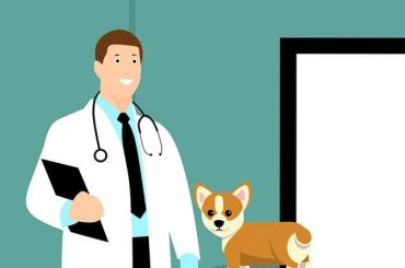Come prepararsi al test Veterinaria 2019