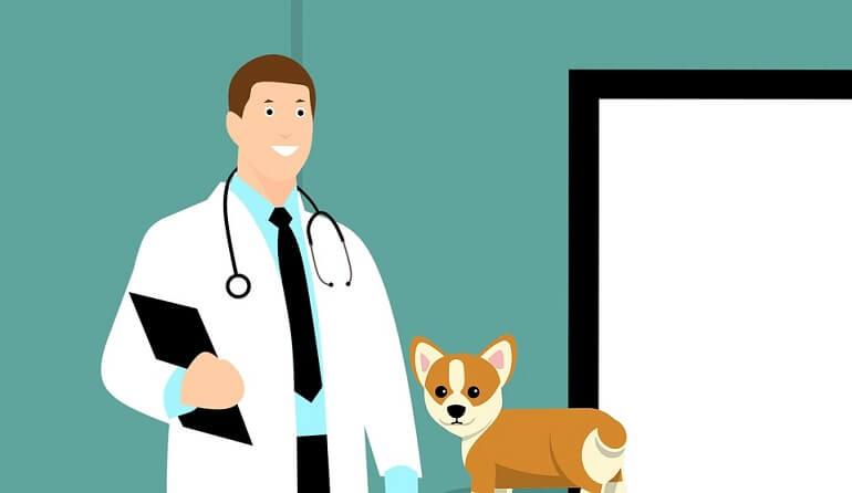 test veterinaria